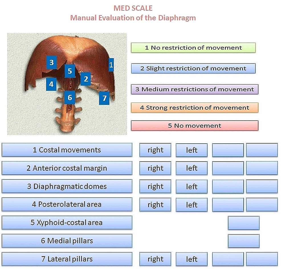 The-Manual-Evaluation-Diaphragm-(MED)-scale