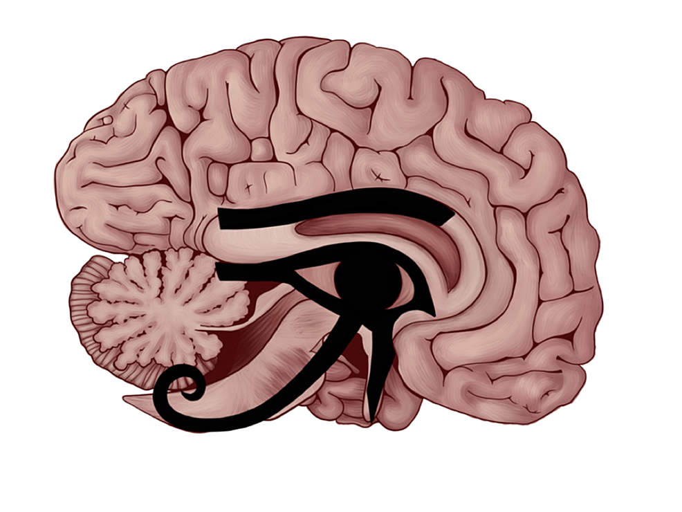 The-Eye-of-Horus-fitted-in-the-mid-sagittal-section-of-the-human-brain.