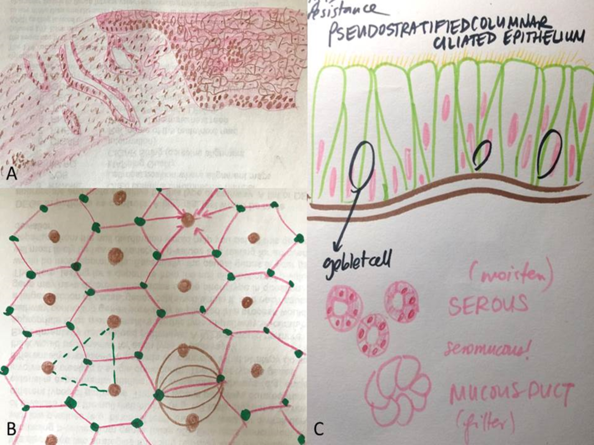 Cureus | Art as a Learning Tool: Medical Student Perspectives on