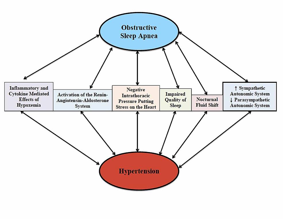 The-pathophysiological-mechanisms-shared-between-obstructive-sleep-apnea-and-hypertension