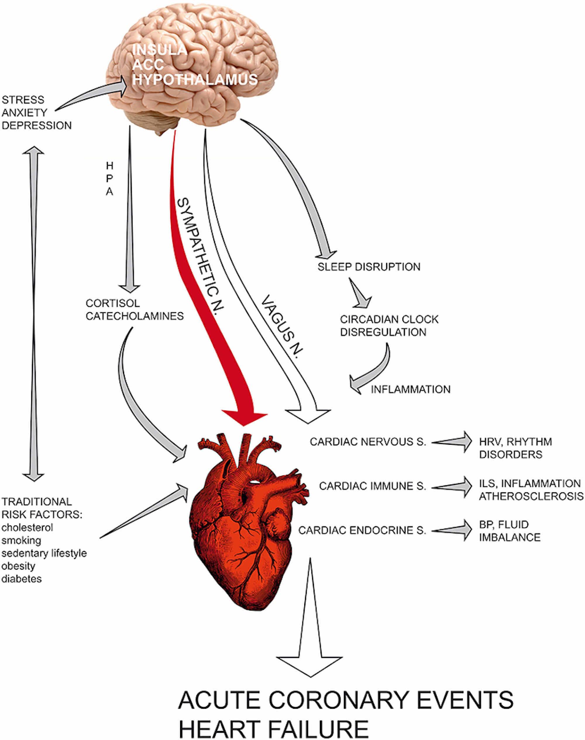 Cureus | Takotsubo Cardiomyopathy: Medical and Psychiatric Aspects