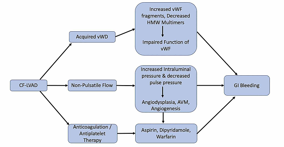 Algorithm-on-the-pathophysiology-of-gastrointestinal-bleeding