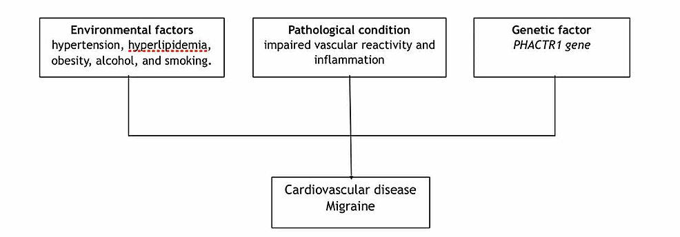 Shared-risk-factors-for-migraine-and-CVD