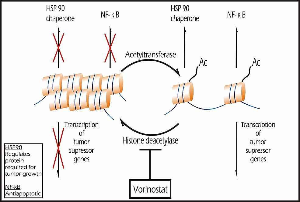 Epigenetic-Modulators