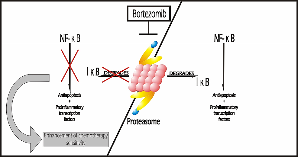 Proteasome-Inhibitors