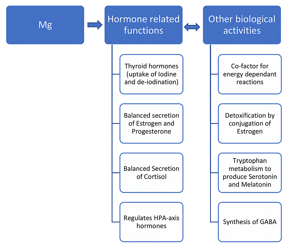 The-schematic-representation-of-the-role-of-Mg-in-different-human-biological-activities