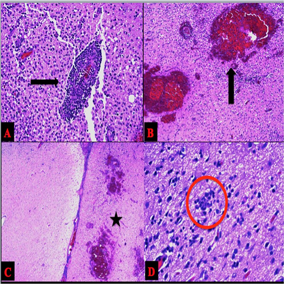 Microscopic-Analysis
