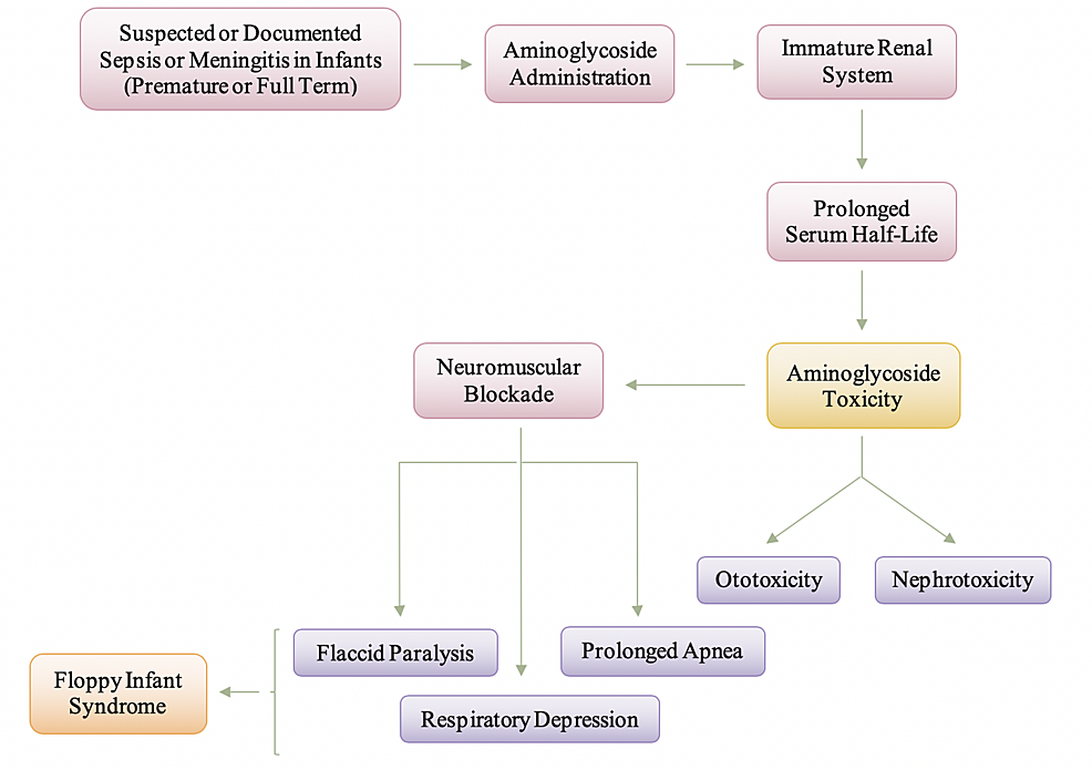 Manifestation-and-Pathogenesis-of-Aminoglycoside-Toxicity-in-Infants-and-Neonates