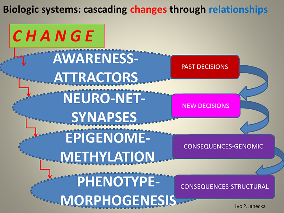 Schema-of-a-Propagating-Change-Through-Levels-of-Biologic-Systems.